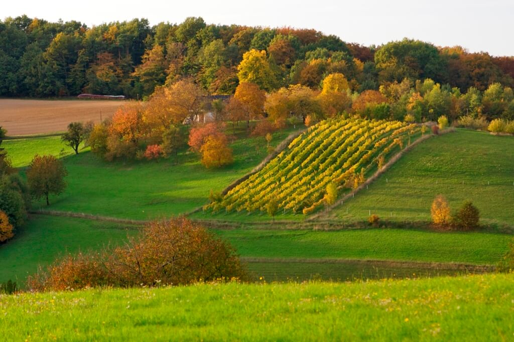 Herbst im Burgenland