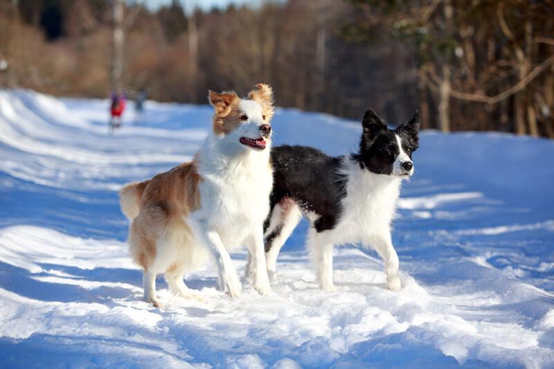 Hunde im Schnee im Gartenhotel Magdalena
