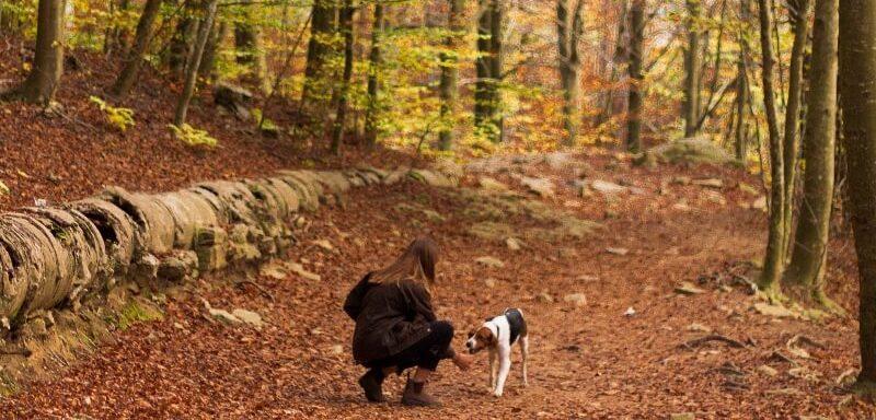 eine junge Frau mit ihrem Hund in einem herbstlichen Wald