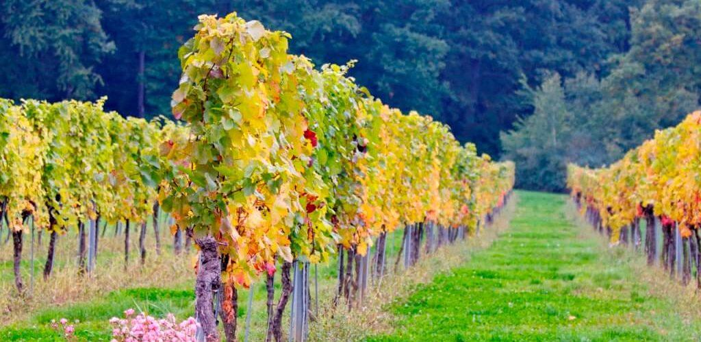 Weingärten_Landhofmühle