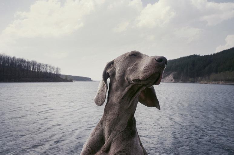 Urlaub mit Hund in den Naturidyll Hotels