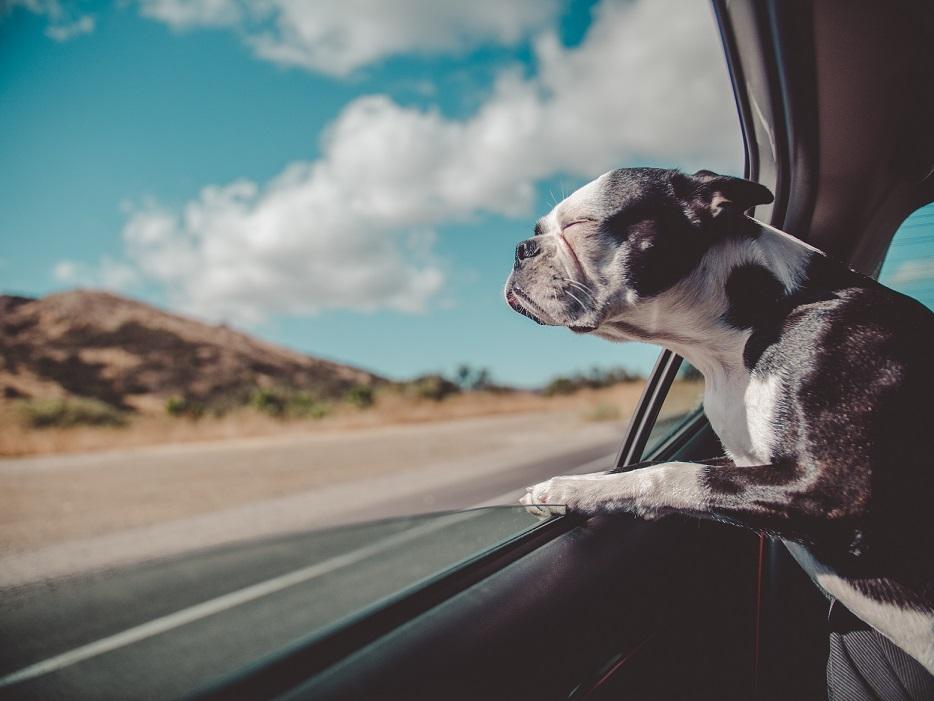 Transport im Auto für deinen Hund