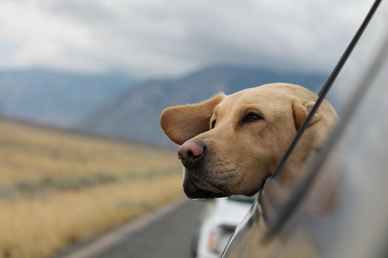 Urlaub mit Hund in den Naturiyll Hotels in Österreich und Südtirol