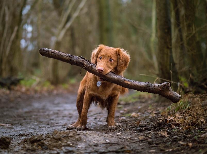 Urlaub mit Hund in der Natur