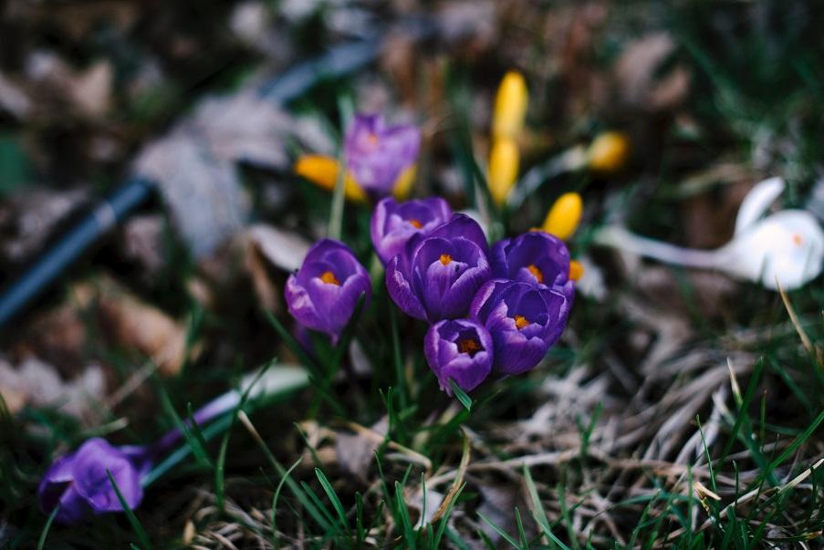 Frühling im Berghotel Presslauer