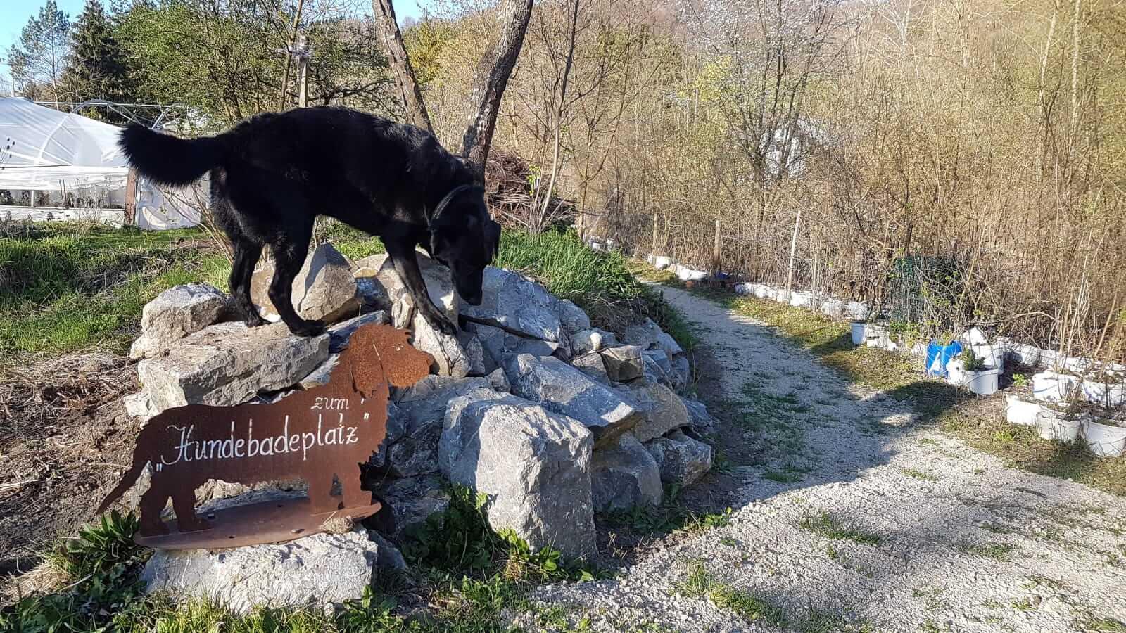 Ab zum Hundebadeplatz im Naturidyll Hotel Steinschalerhof