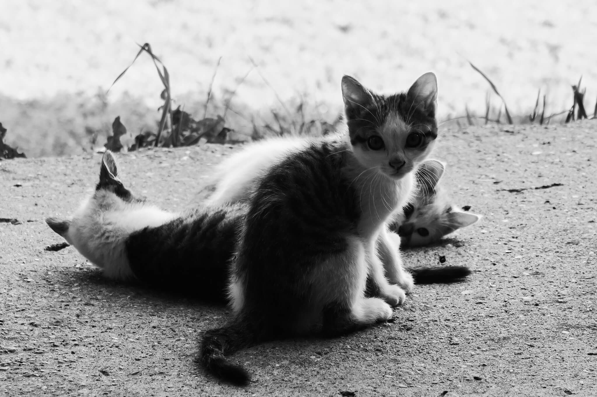 Naturidyll_Hotel_Presslauer_Babykatzen