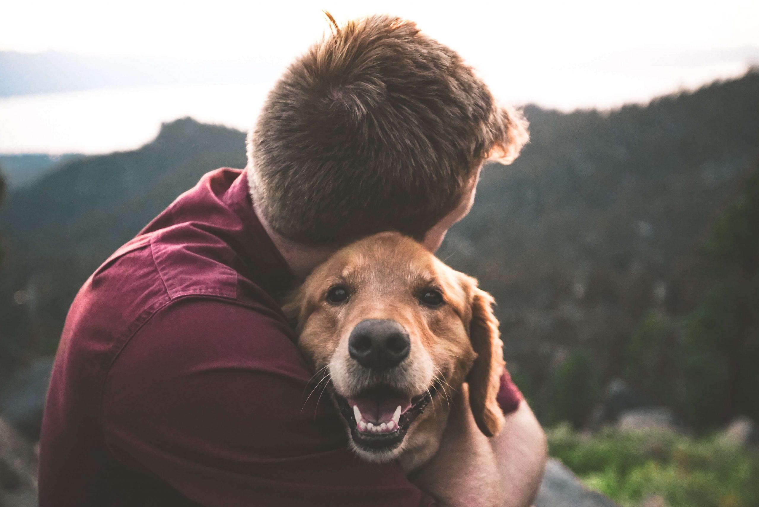 Welthundetag - 10 Gründe warum wir Hunde so lieben