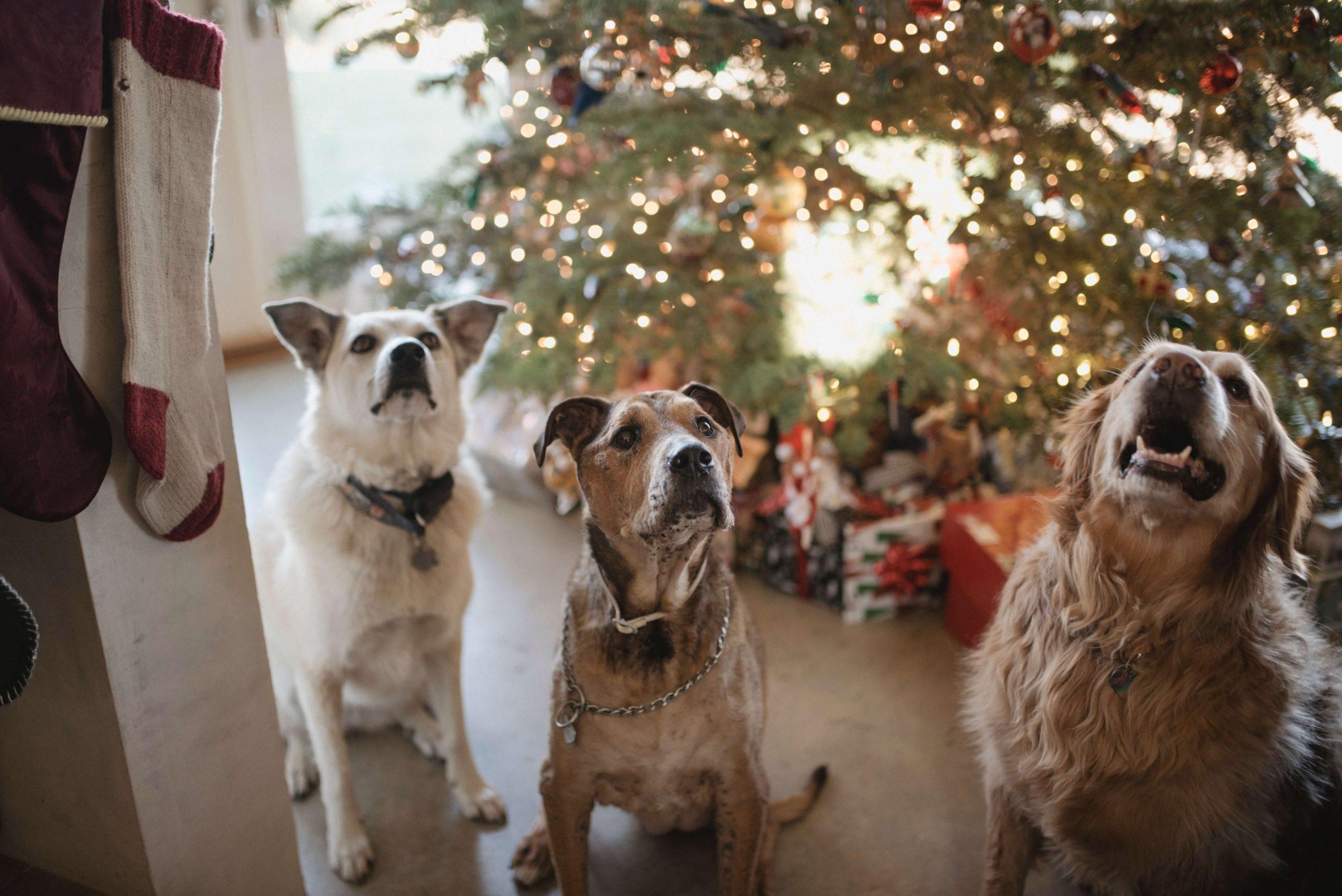 Weihnachtsgeschenke für deinen Hund
