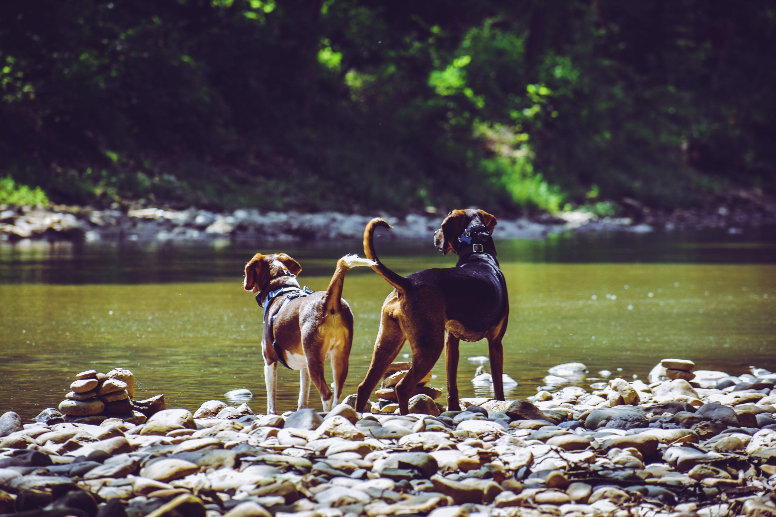 Abkühlung mit Hund Naturbadeplätze