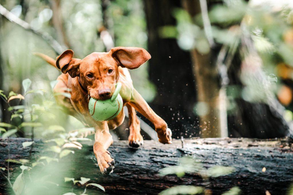Hund spielt im Wald