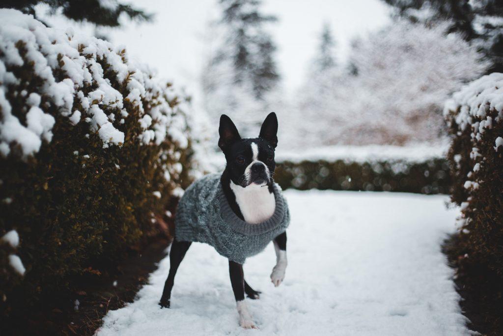 Warm anziehen im Winter