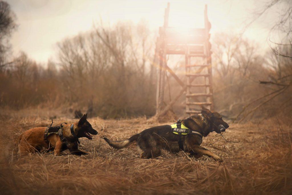 Hunde im Nebel