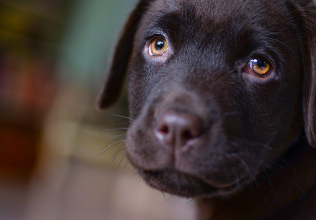 Medikamente können bei ängstlichen Hunden Abhilfe schaffen.
