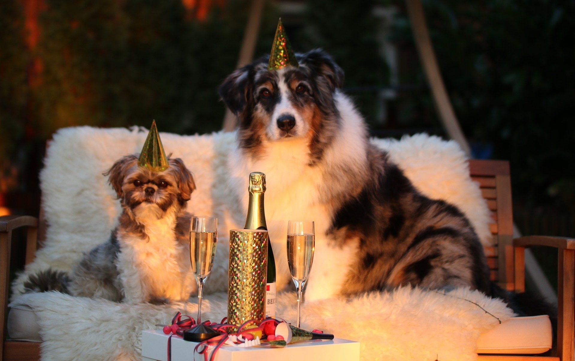 Tierfreundlicher Jahreswechsel Tipps