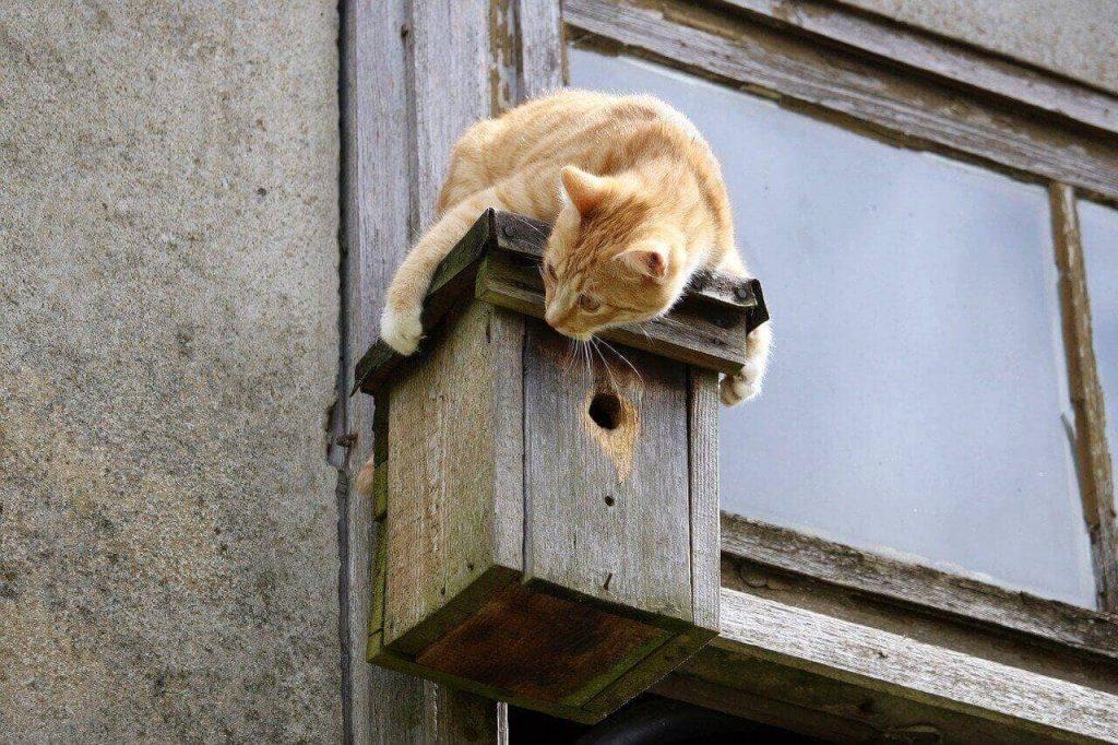 Katze sitz am Vogelhaus