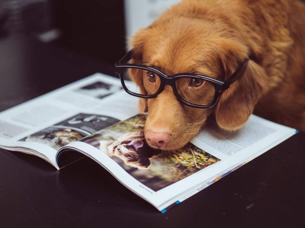Hund beim Arbeiten