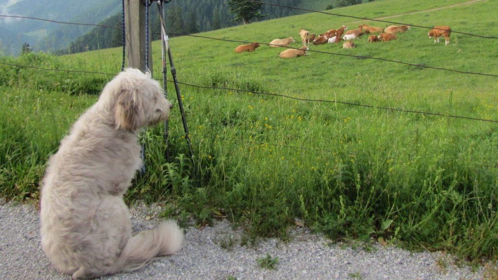Hund Steinschalerhof Paula