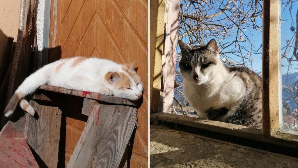 Katzen Momo und Pimps ©Presslauer