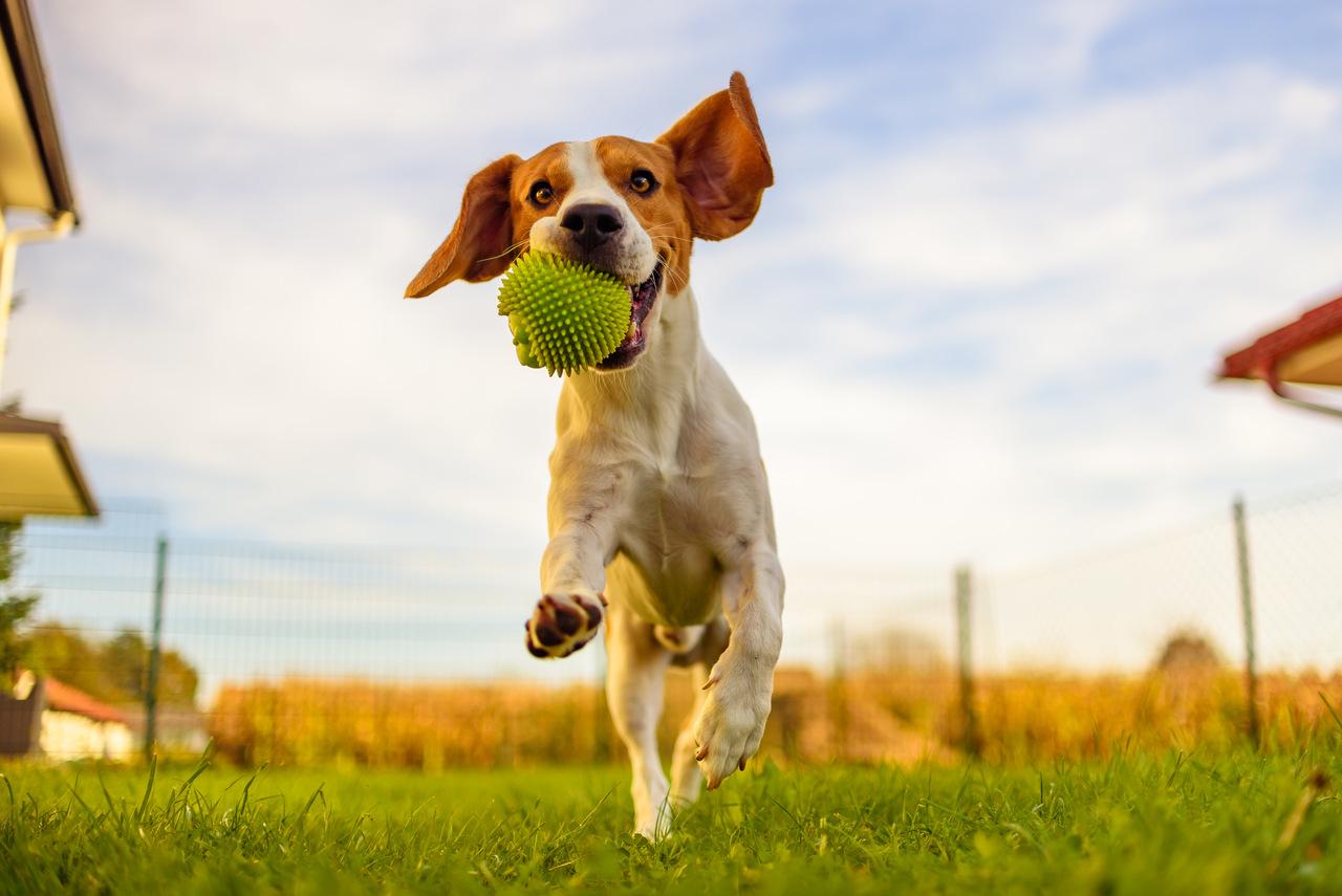 Freizeit mit Hund - Tipps von den Naturidyll Hotels