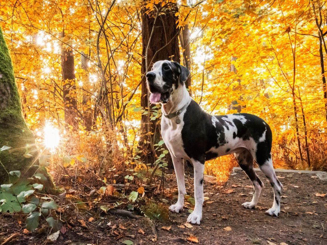 Wandern mit Hund im Herbst Naturidyll Hotels