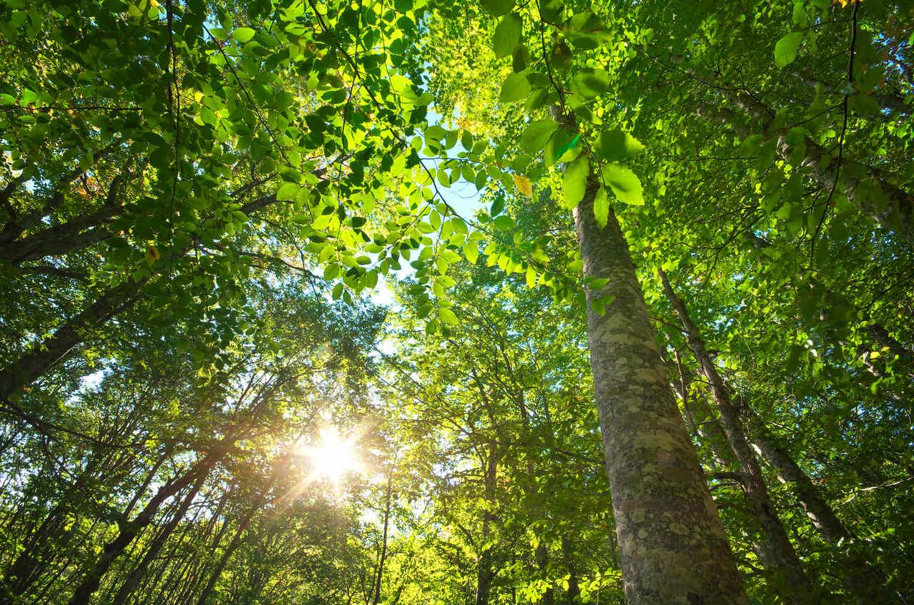 Erholung im Wald Naturidyll Hotels