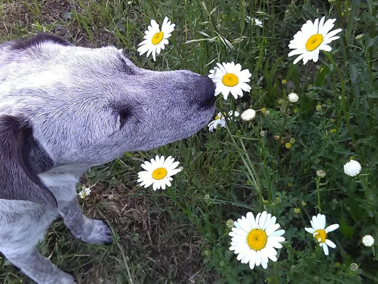 Frühling_urlaub_hund