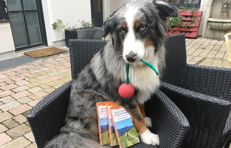 Gewinnspiel Hund